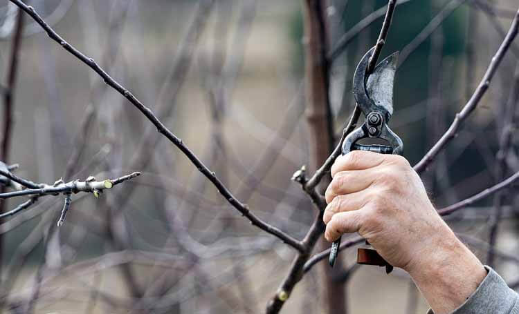Lieblings Baumschnitt entsorgen | Entsorgen.org #OW_07