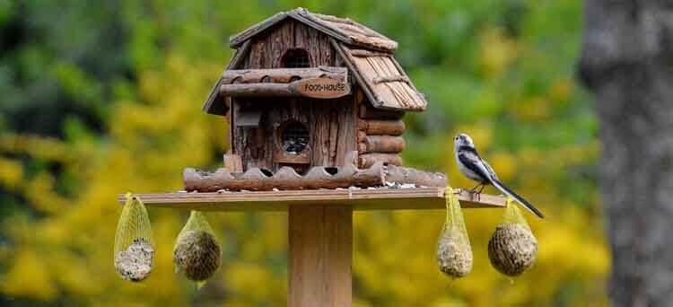 Altes Frittierfett eignet sich gut als Vogelfutter