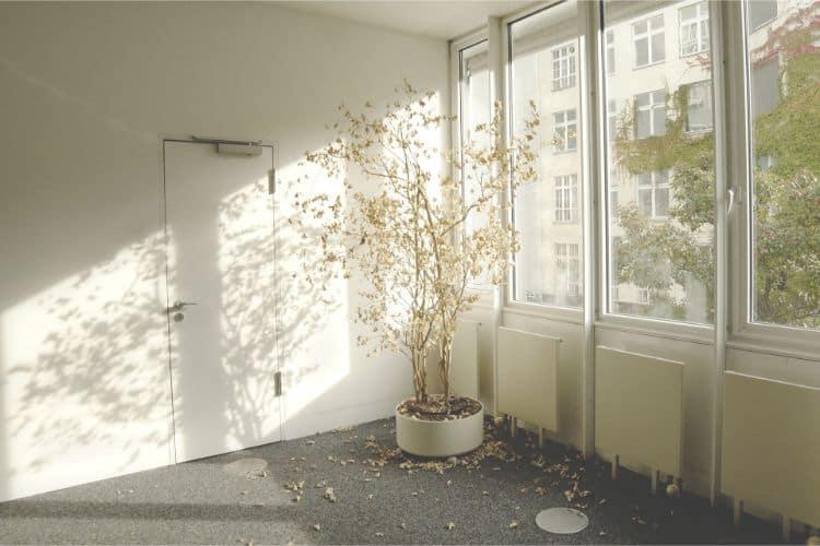 Zimmerpflanze entsorgen